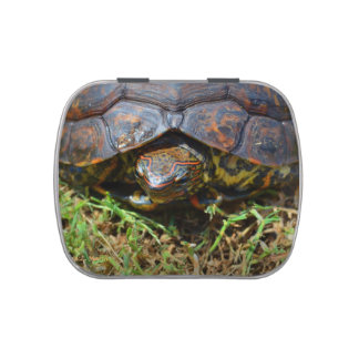 Ornate Turtle top view saturated.jpg Candy Tin