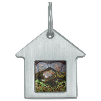Ornate Turtle top view saturated.jpg Pet ID Tag