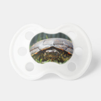 Ornate wood turtle at his level in grass pacifier