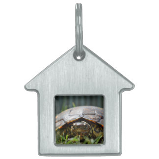 Ornate wood turtle at his level in grass pet name tag