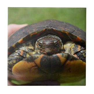 Ornate wood turtle in hand small square tile
