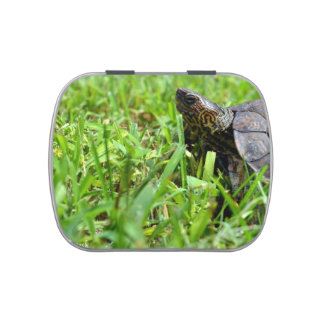 ornate wood turtle looking left jelly belly tin