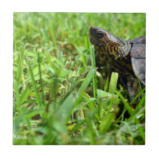 ornate wood turtle looking left small square tile