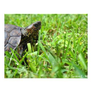 ornate wood turtle looking right custom flyer
