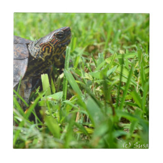 ornate wood turtle looking right small square tile