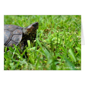 ornate wood turtle looking right stationery note card