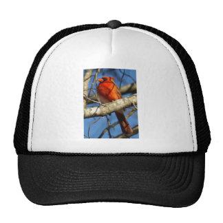 Ornitología cardinal gorras de camionero