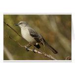 Ornitología del Mockingbird Felicitacion