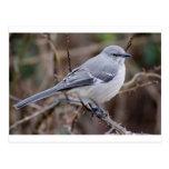 Ornitología del Mockingbird Tarjetas Postales
