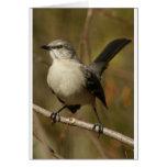 Ornitología del Mockingbird Tarjeton