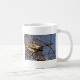 Ornitología del Mockingbird Tazas