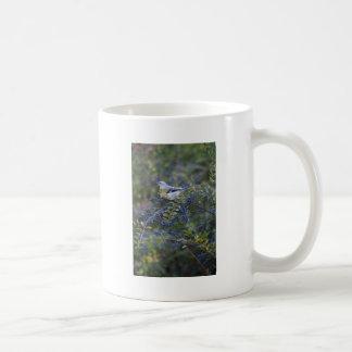 Ornitología del Mockingbird Taza De Café