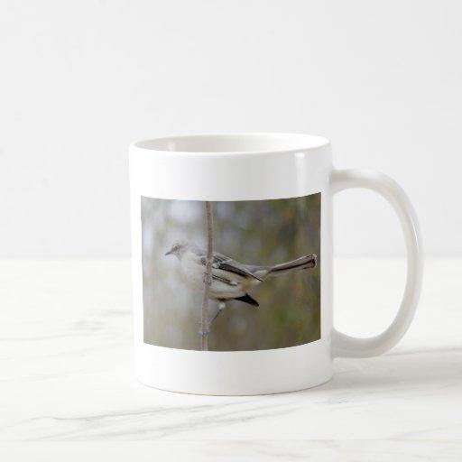 Ornitología del Mockingbird Taza Clásica