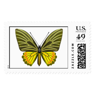 Ornitoptera butterfly, tropical beauty postage