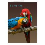 Oro del amor de los loros y Macaw azul de Scarlett Tarjeton