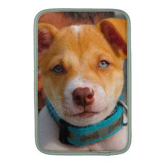 Oro y perro de perrito blanco con el cuello azul fundas macbook air