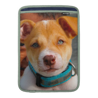 Oro y perro de perrito blanco con el cuello azul funda macbook air