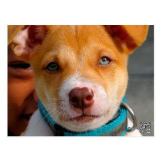 Oro y perro de perrito blanco con el cuello azul postal