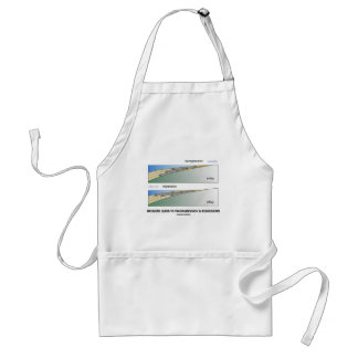 Orogeny Leads To Transgression & Regression Adult Apron