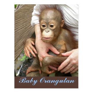 Orphan Baby Orangutan Post Card