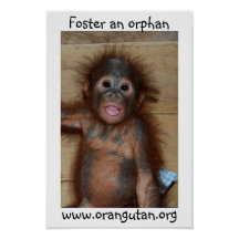 Orphan Baby Orangutan Print