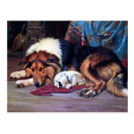 Orphan Dog with Collie Vintage Art Postcard