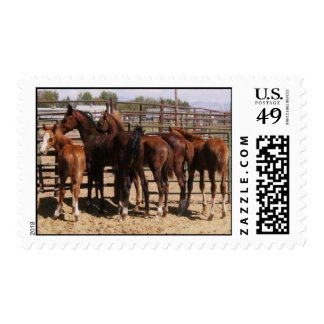 Orphan foals postage stamp