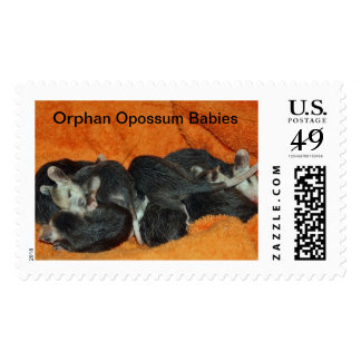 Orphan Opossum Babies Postage Stamps