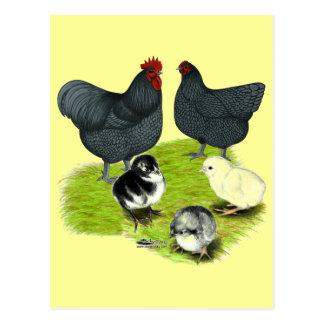Orpington Blue Chicken Family Postcard