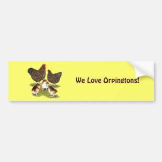 Orpington Jubilee Chicken Family Bumper Sticker