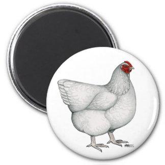 Orpington White Hen Fridge Magnets