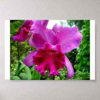 Orquídea 2 de Singapur Póster