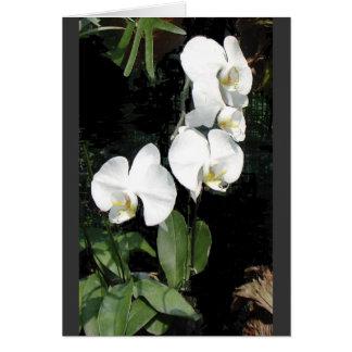 Orquídea 4 de Singapur Tarjeta Pequeña