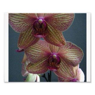 Orquídea 4 fotografía