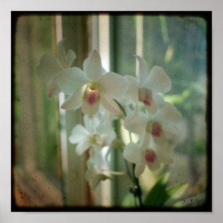 orquídea 8 x 8 fotografía original de la naturalez póster