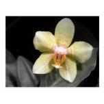 Orquídea amarilla clara tarjetas postales