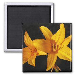 Orquídea amarilla imán cuadrado