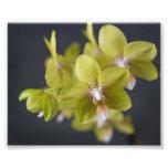 Orquídea amarilla impresión fotográfica