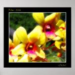 Orquídea amarilla impresiones