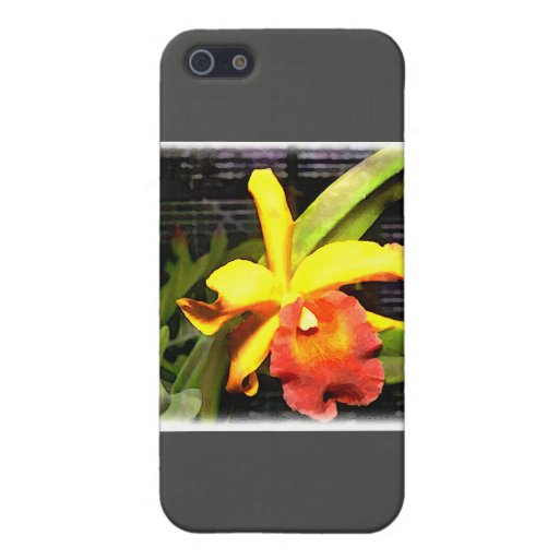 Orquídea amarilla y anaranjada de Cleya en inverna iPhone 5 Carcasa