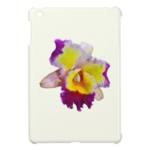 Orquídea amarilla y magenta de Cattleya