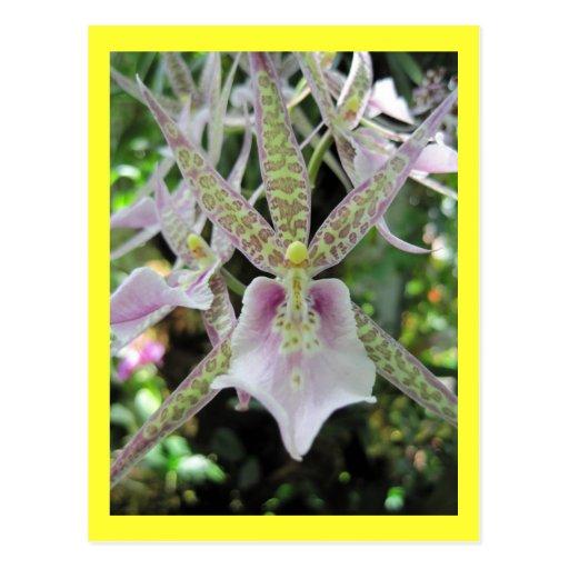 Orquídea amarilla y púrpura manchada postal