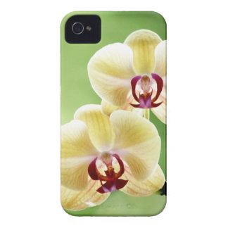 Orquídea amarilla y rosada iPhone 4 Case-Mate funda