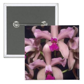 Orquídea, (amethystoglossa de Cattleya), del este Pin Cuadrada 5 Cm