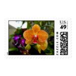 Orquídea anaranjada sellos