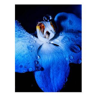 Orquídea azul postal