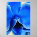 Orquídea azul poster