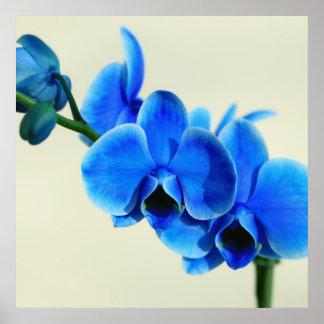Orquídea azul póster