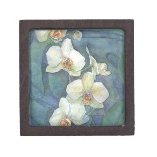 Orquídea blanca caja de regalo de calidad