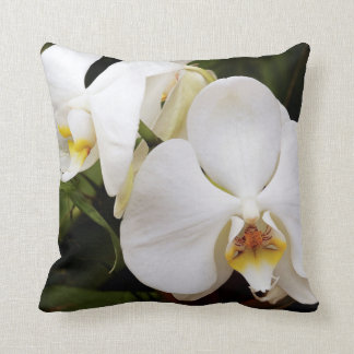 Orquídea blanca de la luna (Aphrodite del Cojín